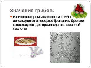 Значение грибов. В пищевой промышленности грибы используются в процессе броже