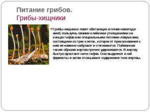 Питание грибов. Грибы-хищники Грибы-хищники ловят обитающих в почве нематод и