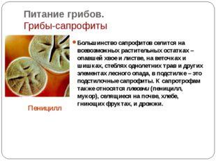 Питание грибов. Грибы-сапрофиты Большинство сапрофитов селится на всевозможны