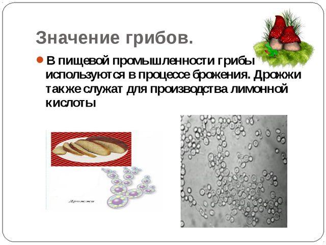 Значение грибов. В пищевой промышленности грибы используются в процессе броже...