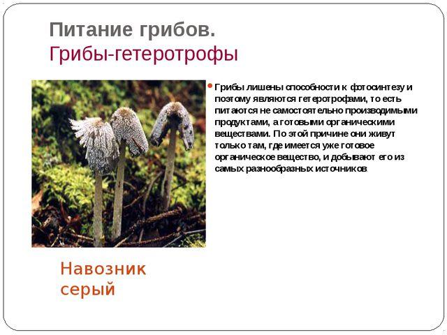Питание грибов. Грибы-гетеротрофы Грибы лишены способности к фотосинтезу и по...