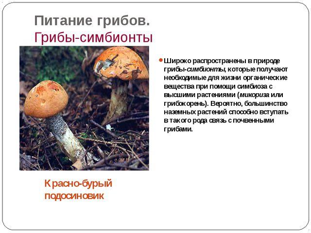 Питание грибов. Грибы-симбионты Широко распространены в природе грибы-симбион...