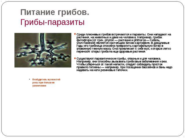 Питание грибов. Грибы-паразиты Возбудитель мучнистой росы при большом увеличе...