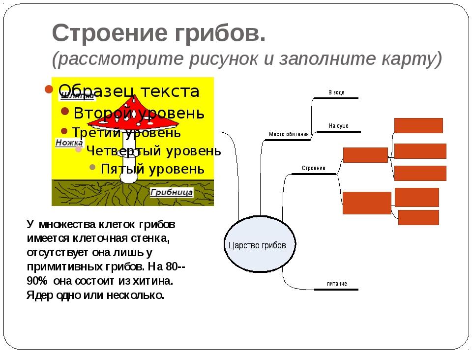 Строение грибов. (рассмотрите рисунок и заполните карту) У множества клеток г...