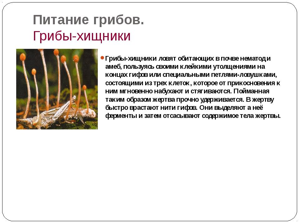 Питание грибов. Грибы-хищники Грибы-хищники ловят обитающих в почве нематод и...