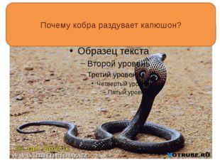 Почему кобра раздувает капюшон?