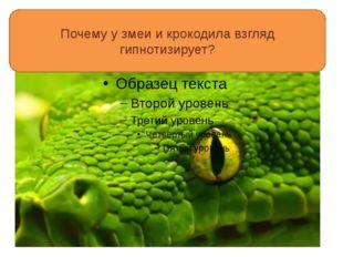 Почему у змеи и крокодила взгляд гипнотизирует?