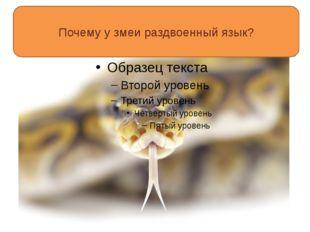 Почему у змеи раздвоенный язык?