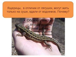 Ящерицы, в отличии от лягушек, могут жить только на суше, вдали от водоемов.