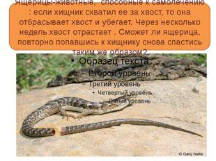 Ящерицы-животные, способные к самолечению : если хищник схватил ее за хвост,