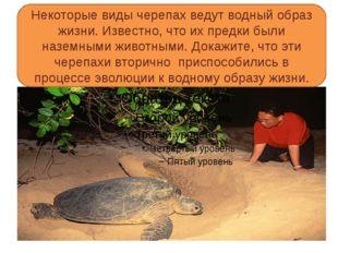 Некоторые виды черепах ведут водный образ жизни. Известно, что их предки был