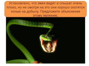 Установлено, что змеи видят и слышат очень плохо, но не смотря на это они хо
