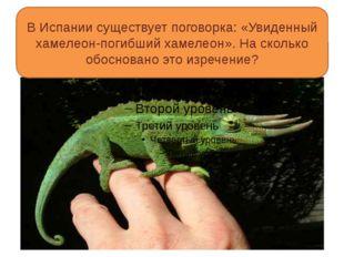 В Испании существует поговорка: «Увиденный хамелеон-погибший хамелеон». На с