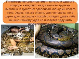 Гигантские неядовитые змеи, питоны и удавы в природе нападают на достаточно