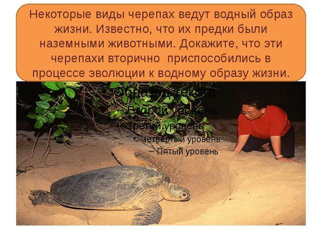 Некоторые виды черепах ведут водный образ жизни. Известно, что их предки был...