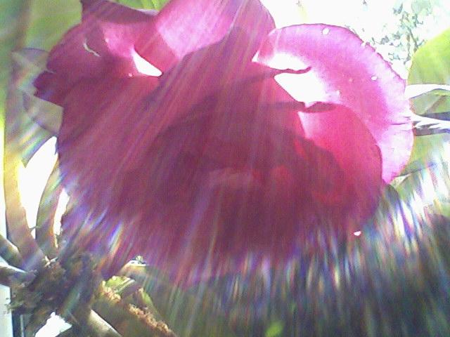 D:\ФОТОАЛЬБОМ\Розы\розы\Photo-0058.jpg