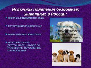 Источник появления бездомных животных в России: ЖИВОТНЫЕ, РОДИВШИЕСЯ НА УЛИЦЕ