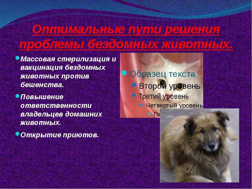 Оптимальные пути решения проблемы бездомных животных. Массовая стерилизация и...