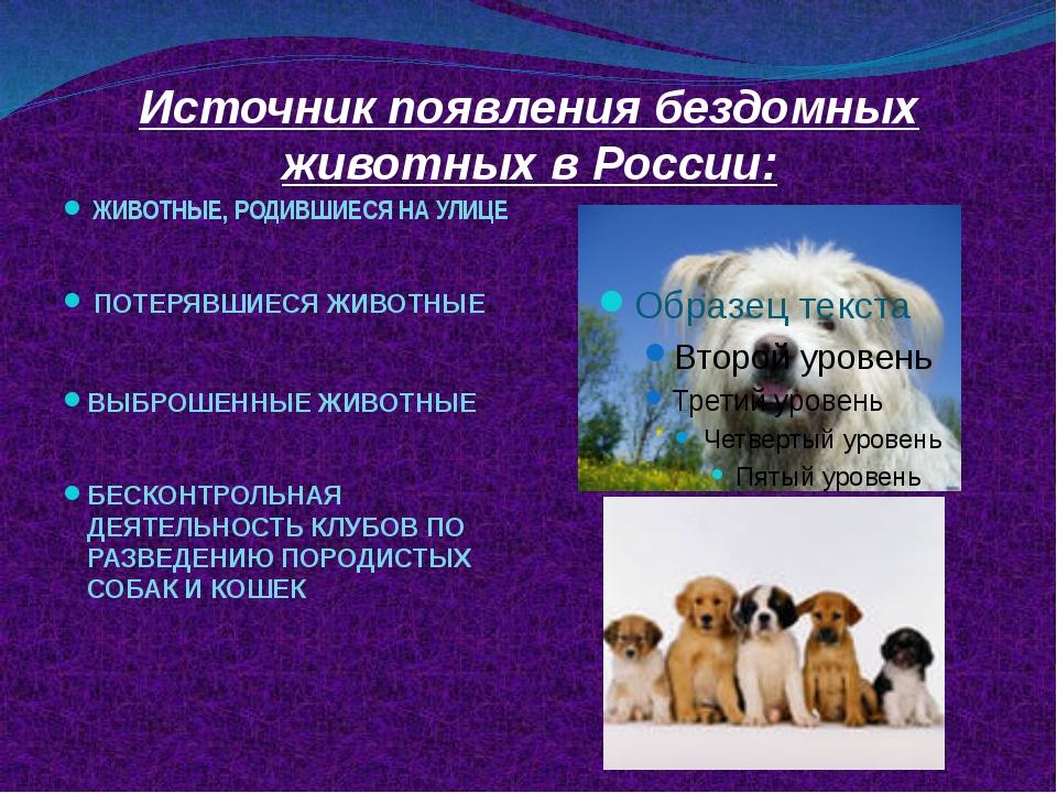 Источник появления бездомных животных в России: ЖИВОТНЫЕ, РОДИВШИЕСЯ НА УЛИЦЕ...