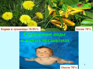 * Корни и луковицы 70-95% Более 70% Содержание воды в живых организмах Около