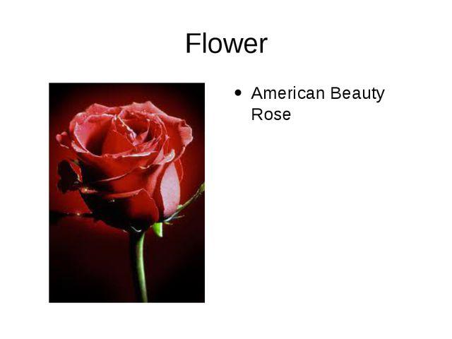 Flower American Beauty Rose