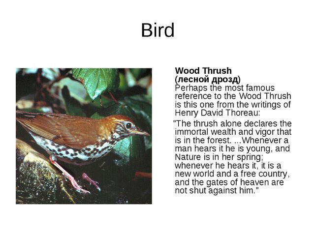 Bird Wood Thrush (лесной дрозд) Perhaps the most famous reference to the Wood...