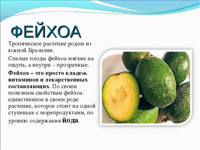 ФЕЙХОА Тропическое растение родом из южной Бразилии. Спелые плоды фейхоа мягк...