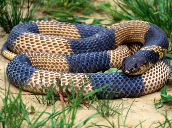 http://www.symbolsbook.ru/images/Z/Snake.jpg