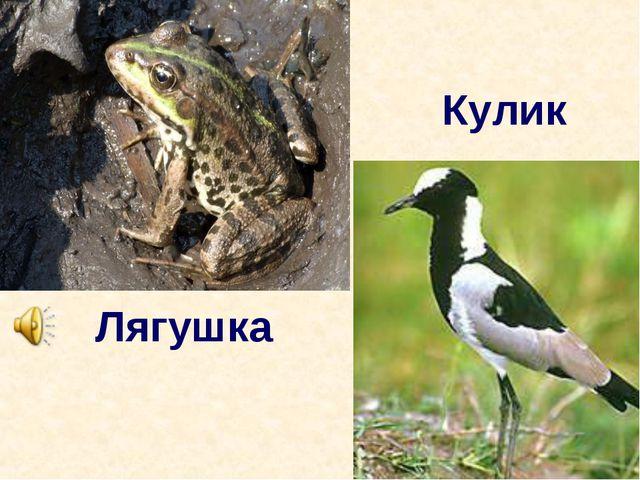 Лягушка Кулик
