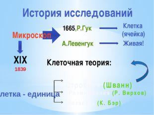 История исследований ХIХ 1665,Р.Гук А.Левенгук Клетка (ячейка) Живая! Клеточн