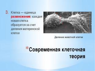 Современная клеточная теория Клетка — единица размножения: каждая новая клетк