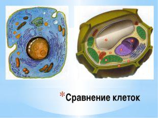 Сравнение клеток Сравнение клеток.