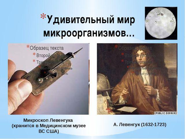 Удивительный мир микроорганизмов… А. Левенгук (1632-1723) Микроскоп Левенгука...
