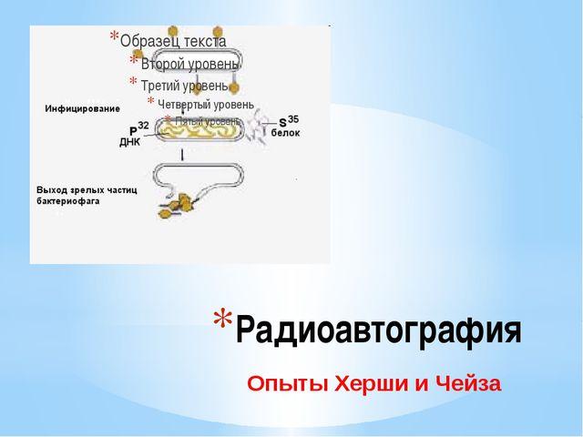 Радиоавтография Опыты Херши и Чейза Радиоавтография. Опыты Херши и Чейза.