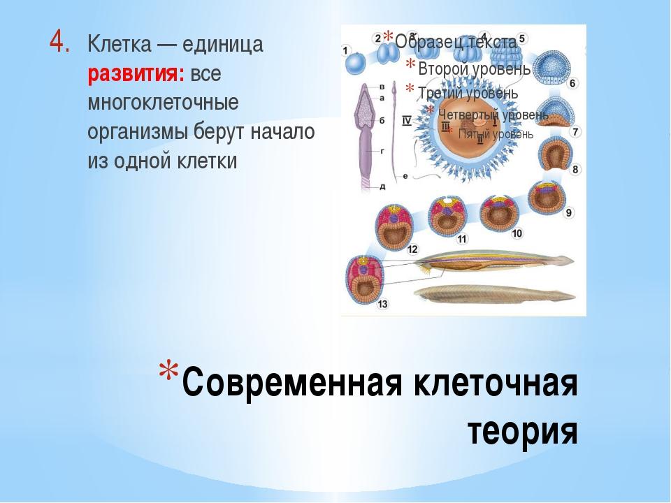 Современная клеточная теория Клетка — единица развития: все многоклеточные ор...