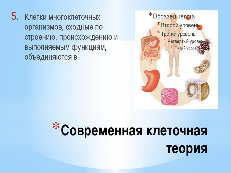 Современная клеточная теория Клетки многоклеточных организмов, сходные по стр...