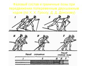 Фазовый состав и граничные позы при передвижении попеременным двухшажным ходо