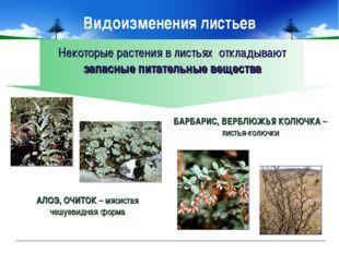 Некоторые растения в листьях откладывают запасные питательные вещества АЛОЭ,