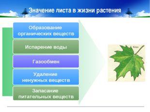 Значение листа в жизни растения Образование органических веществ Испарение во