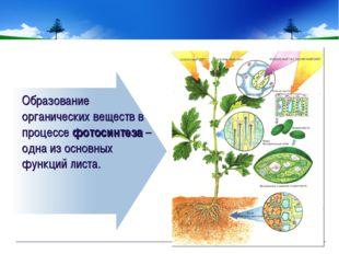 Образование органических веществ в процессе фотосинтеза – одна из основных фу