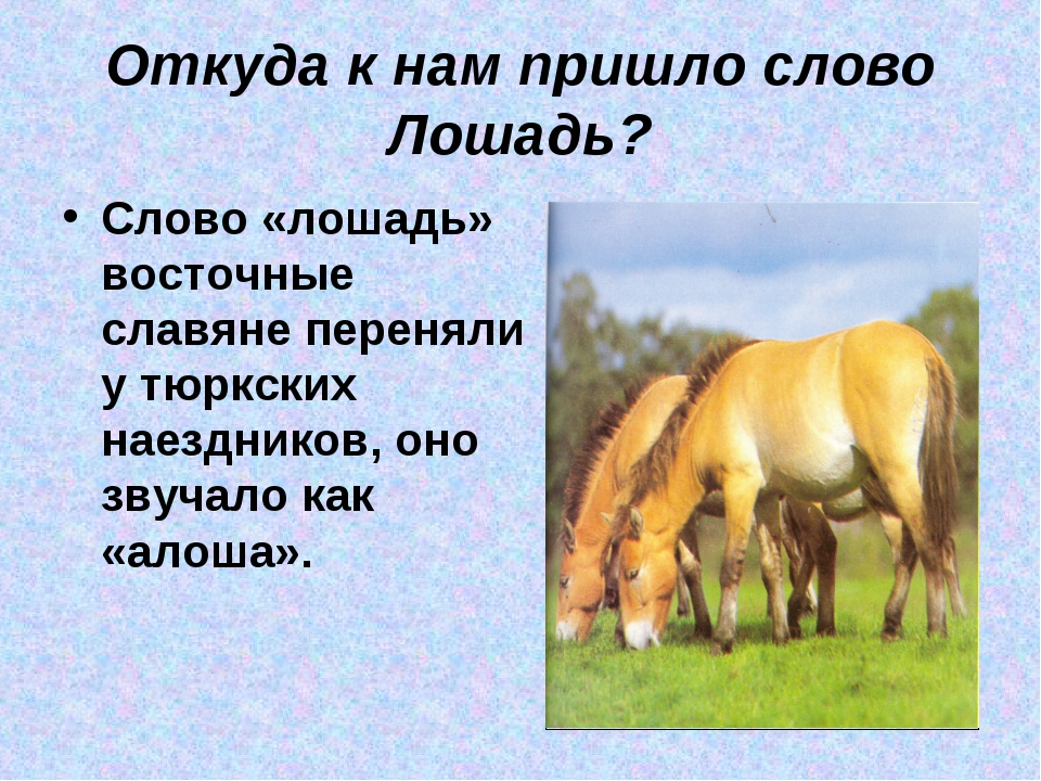Откуда к нам пришло слово Лошадь? Слово «лошадь» восточные славяне переняли у...