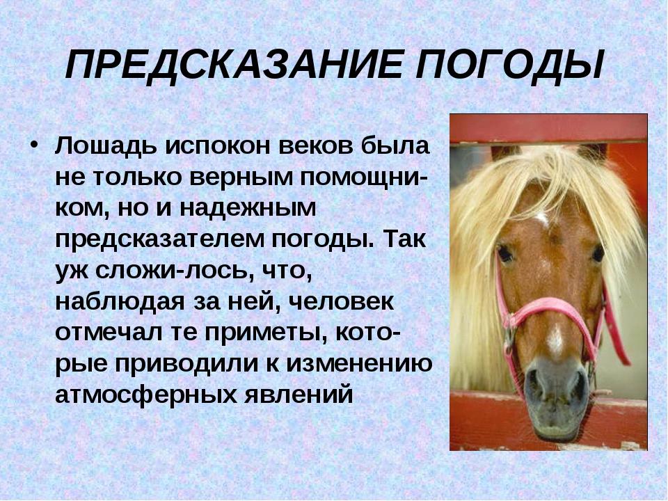ПРЕДСКАЗАНИЕ ПОГОДЫ Лошадь испокон веков была не только верным помощником, н...