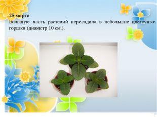 МКОУ ООШ д. Первые Бобровы 2013 г. 25 марта Большую часть растений пересадила