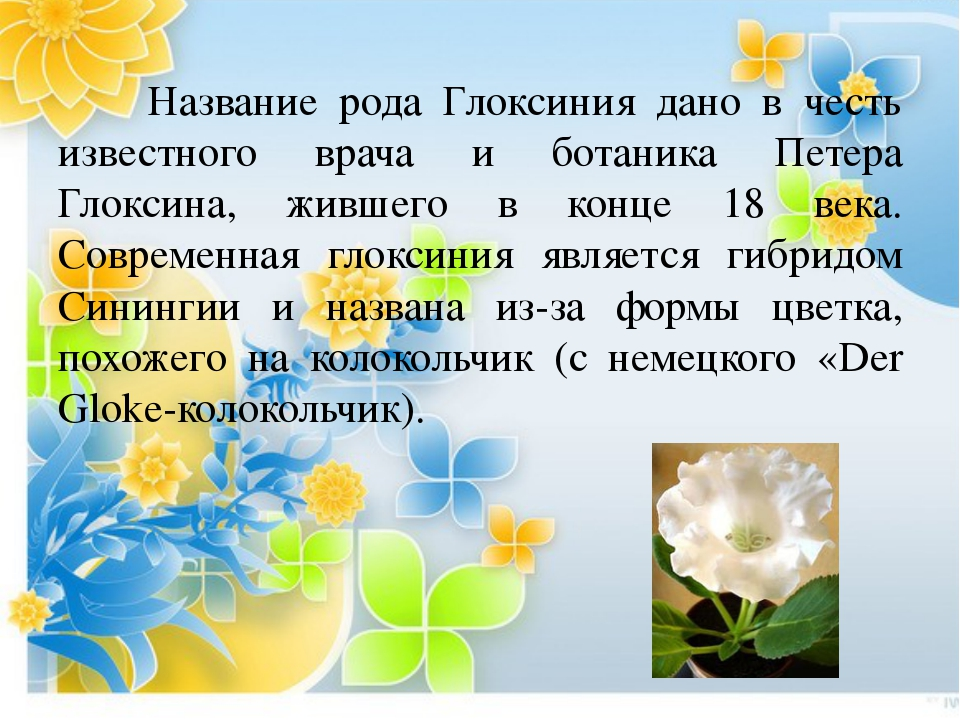 Название рода Глоксиния дано в честь известного врача и ботаника Петера Глок...