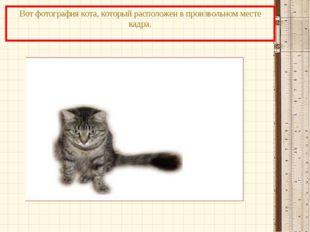 Вот фотография кота, который расположен в произвольном месте кадра.