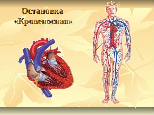 Остановка «Кровеносная»