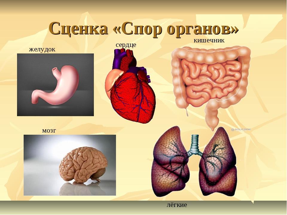 Сценка «Спор органов» желудок сердце кишечник мозг лёгкие