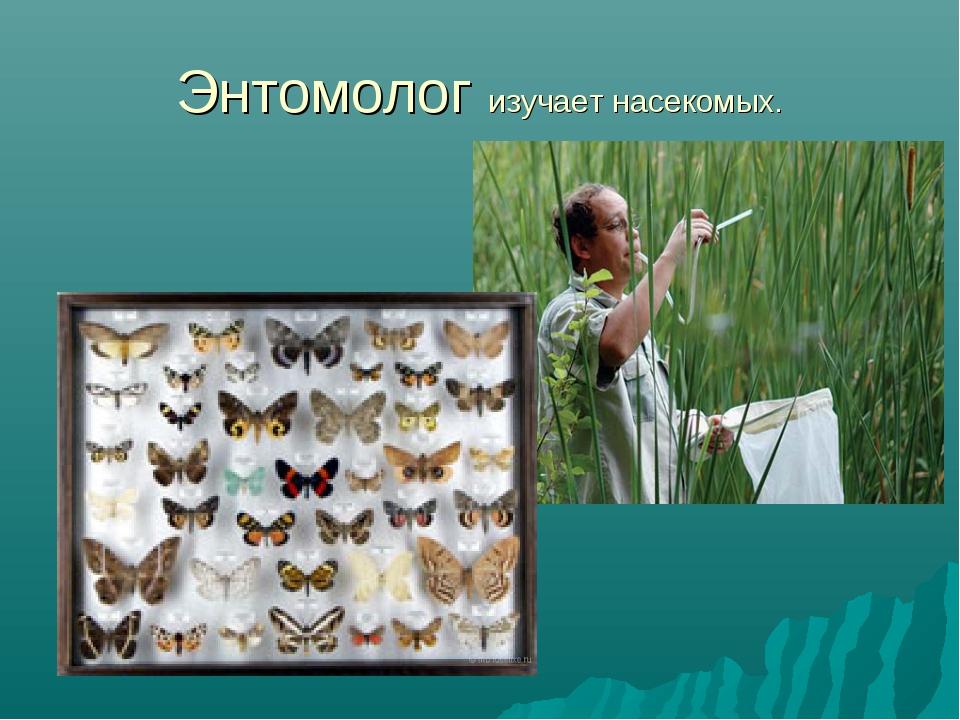 Энтомолог изучает насекомых.