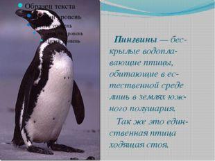 Пингвины — бес-крылые водопла-вающие птицы, обитающие в ес-тественной среде