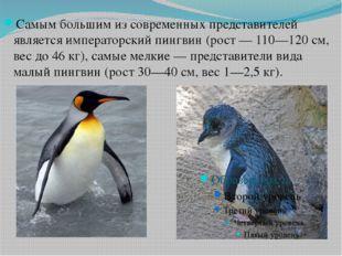 Самым большим из современных представителей является императорский пингвин (